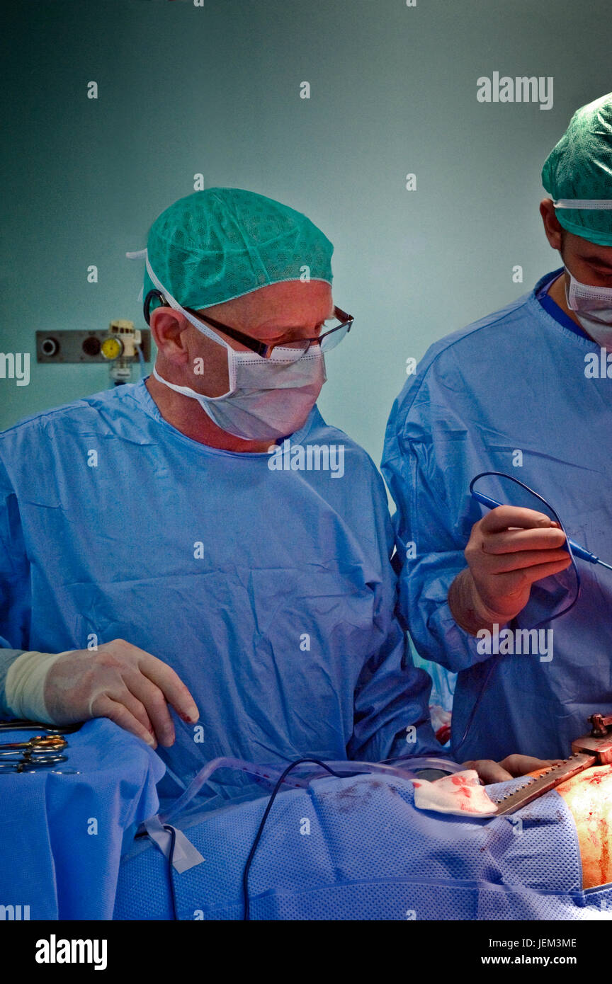 Surgical operating department practitioners are the principal surgical assistant and handle all the surgical instruments - Stock Image