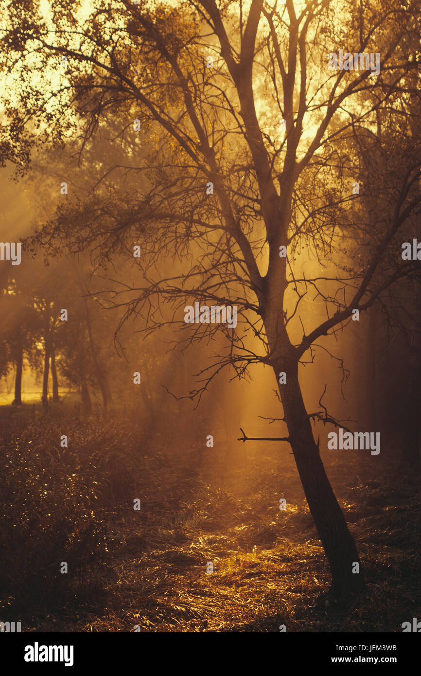 Autumn forest in sunrise - Stock Image