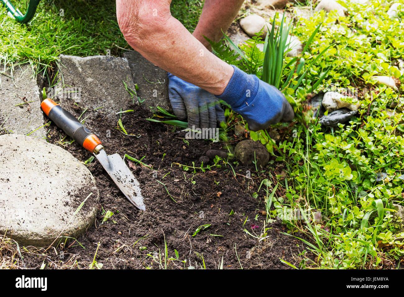 hands of female senior citizen gardening - Stock Image