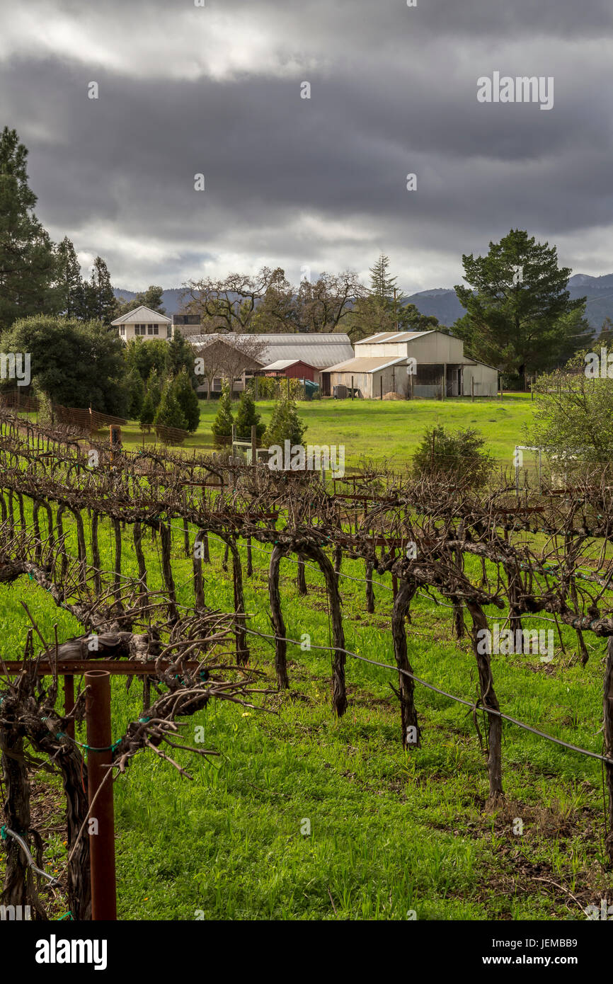 grape vineyard vineyard vineyards viewed from Hagafen Cellars Silverado Trail Napa Napa Valley California United States & grape vineyard vineyard vineyards viewed from Hagafen Cellars ...