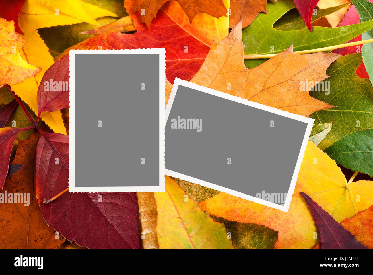 picture with empty space on leaves background - Stock Image