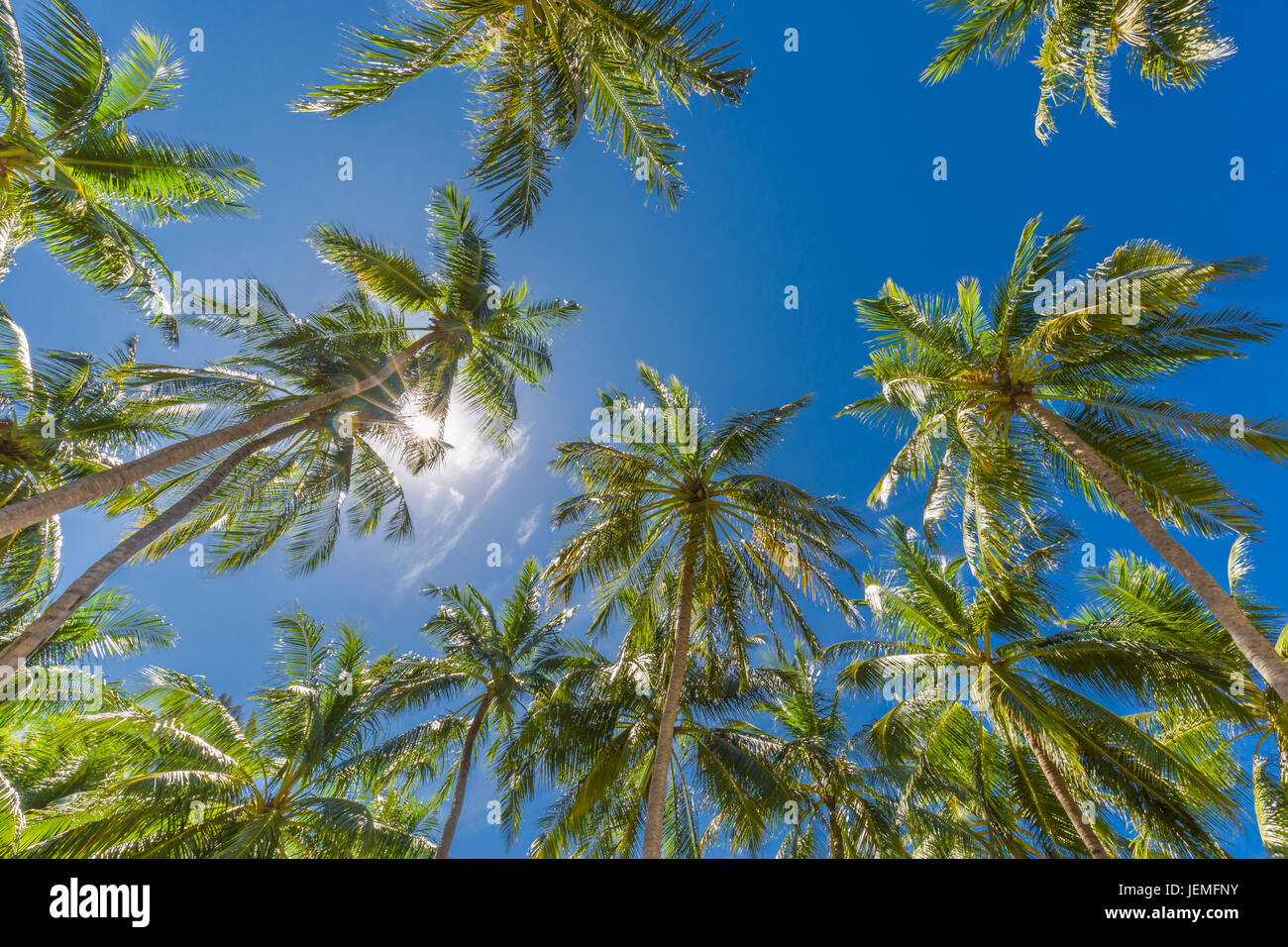 Amazing green palm trees with blue sky. Nature background - Stock Image