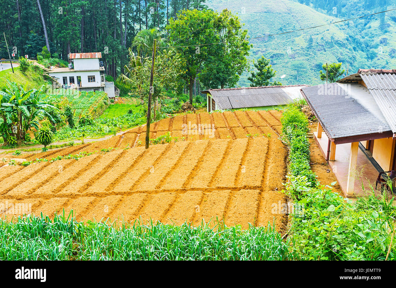 The Plowed Lands Of The Small Kitchen Garden Of Sri Lankan Farmers