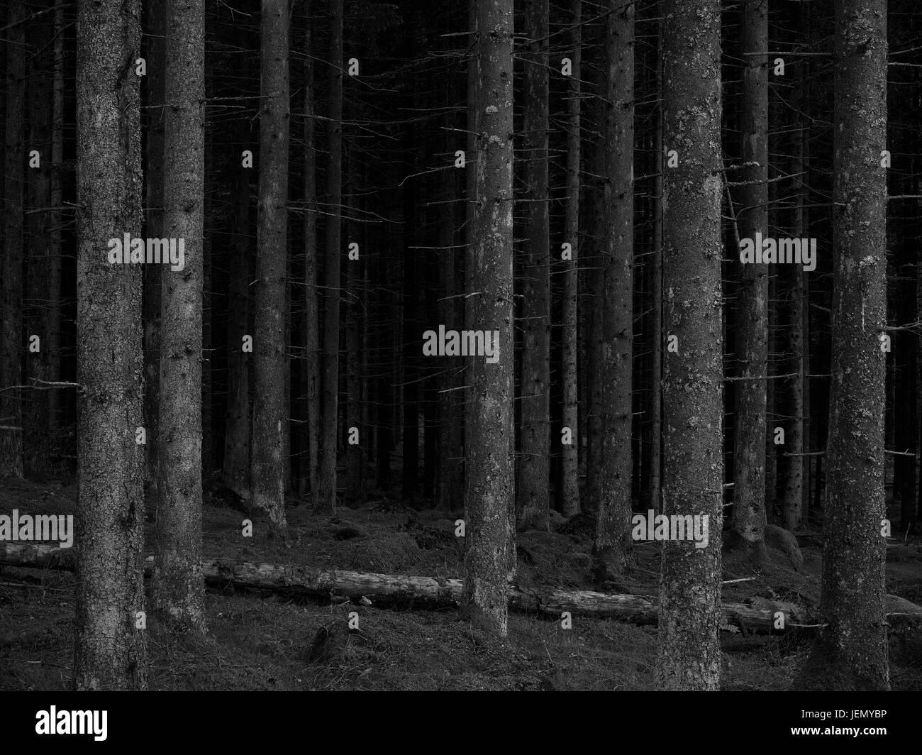 Tree trunks - Stock Image