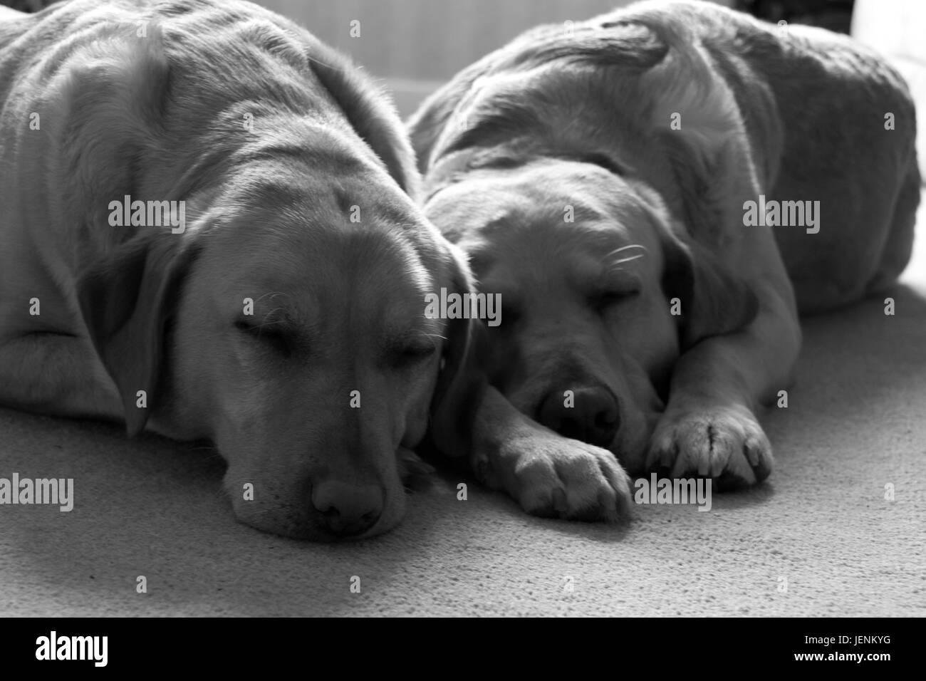 Sleeping Dogs Lie - Stock Image
