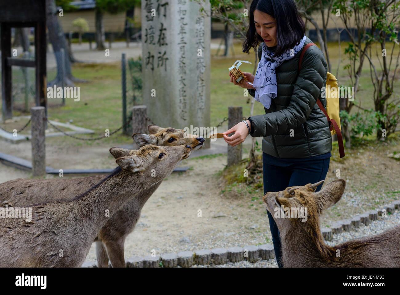 Nara - Stock Image