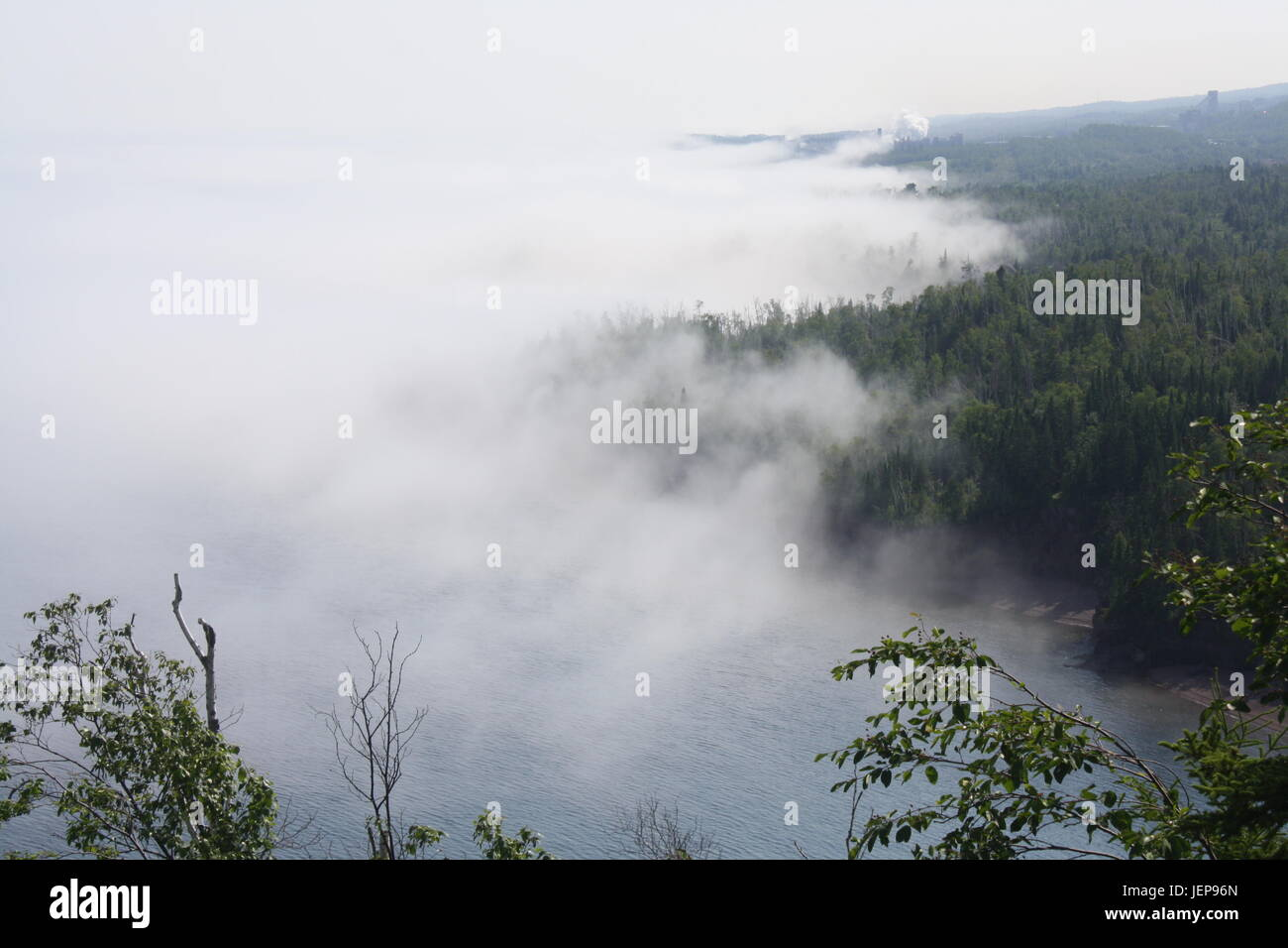 The thick ghostly white fog creeps over the trees. - Stock Image