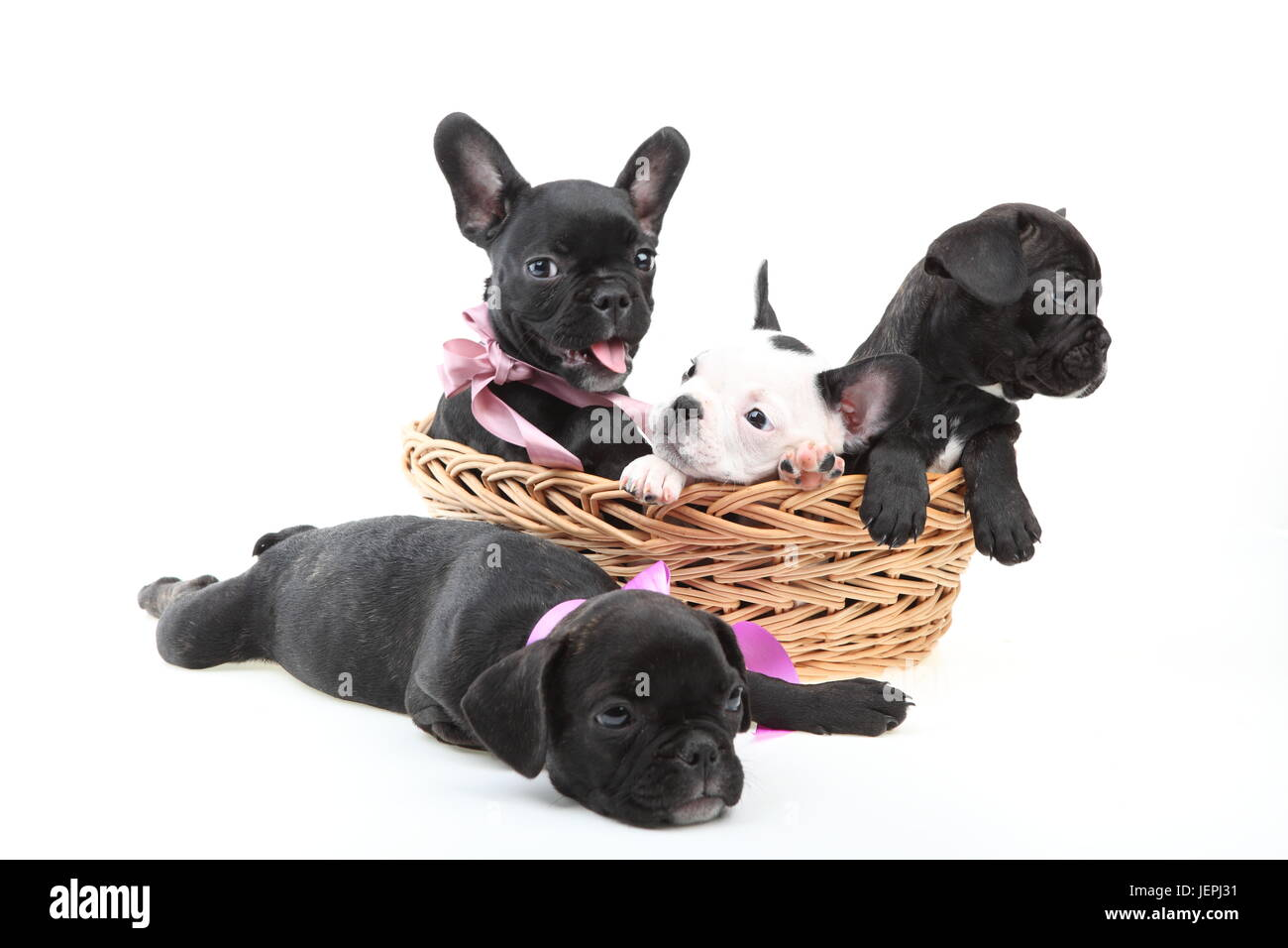 Cute pet dog - Stock Image