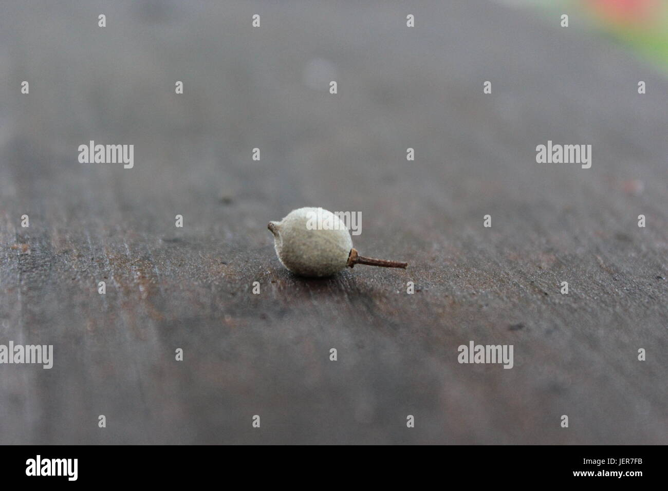 Young seed that has fallen from its mother tree landing gracefully onto this board. - Stock Image