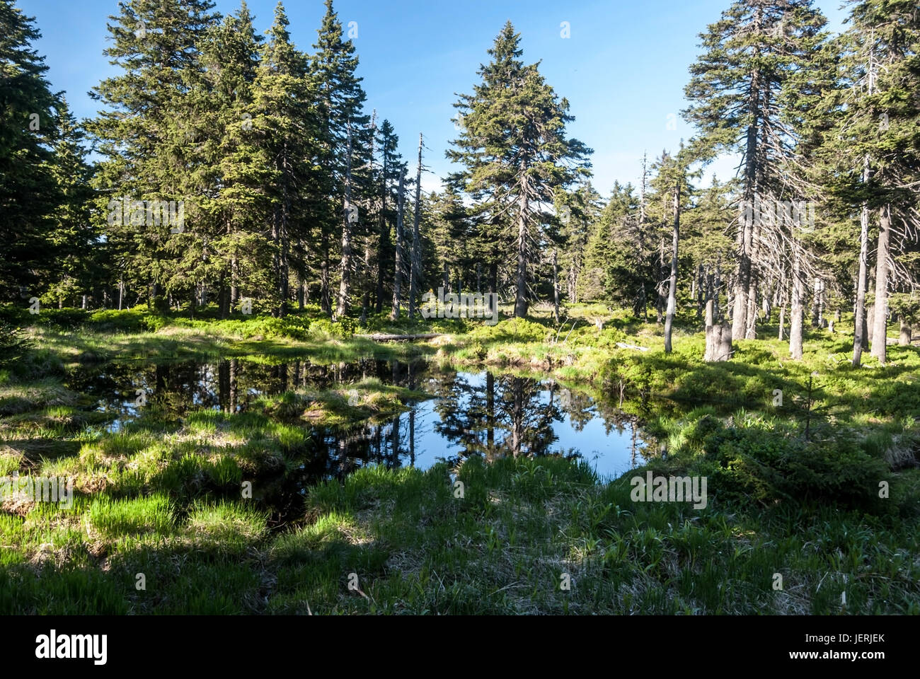 small lake with trees around and clear sky on Spaleny vrch hill in spring Jeseniky mountains in Czech republic Stock Photo