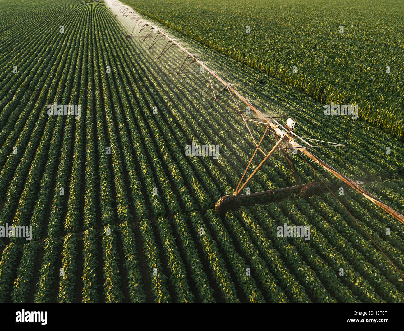 Aerial view of irrigation equipment watering green soybean crops field in summer afternoon, drone point of view - Stock Image