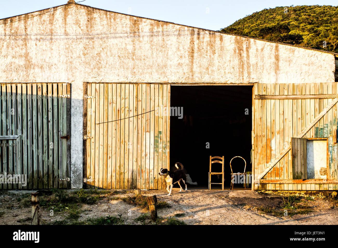 Dog in front of a shed at Pantano do Sul Beach. Florianopolis, Santa Catarina, Brazil. - Stock Image