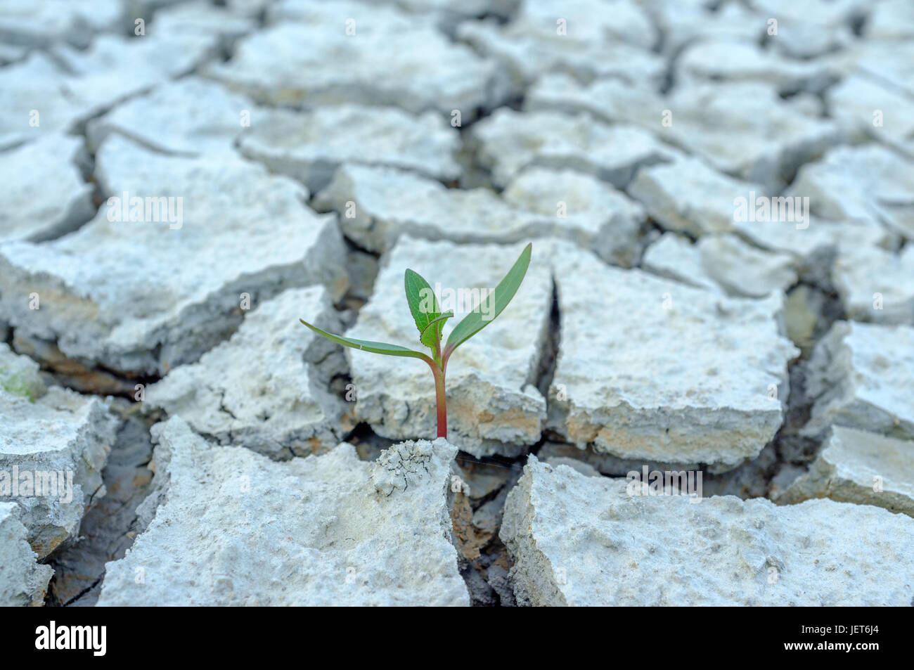 A young plant is born despite the arid soil - Stock Image