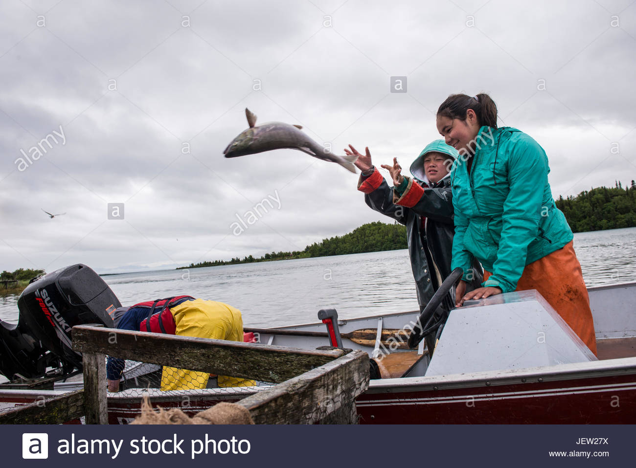 Denai'ina Athabascan girls toss sockeye salmon from a boat into a holding pen. - Stock Image