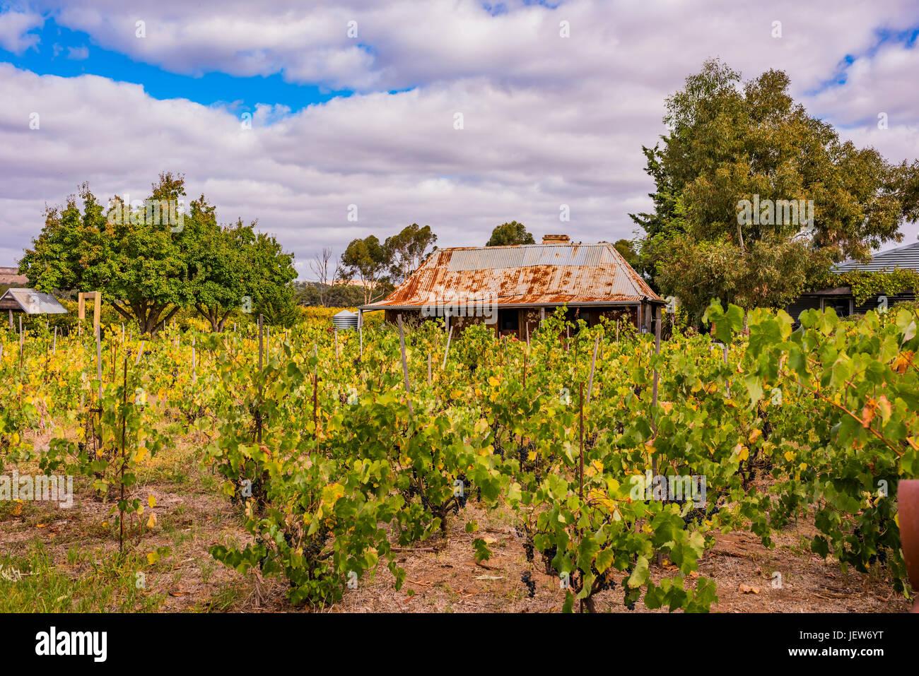 Gibson Wines at Light Pass, Barossa Valley, South Australia - Stock Image