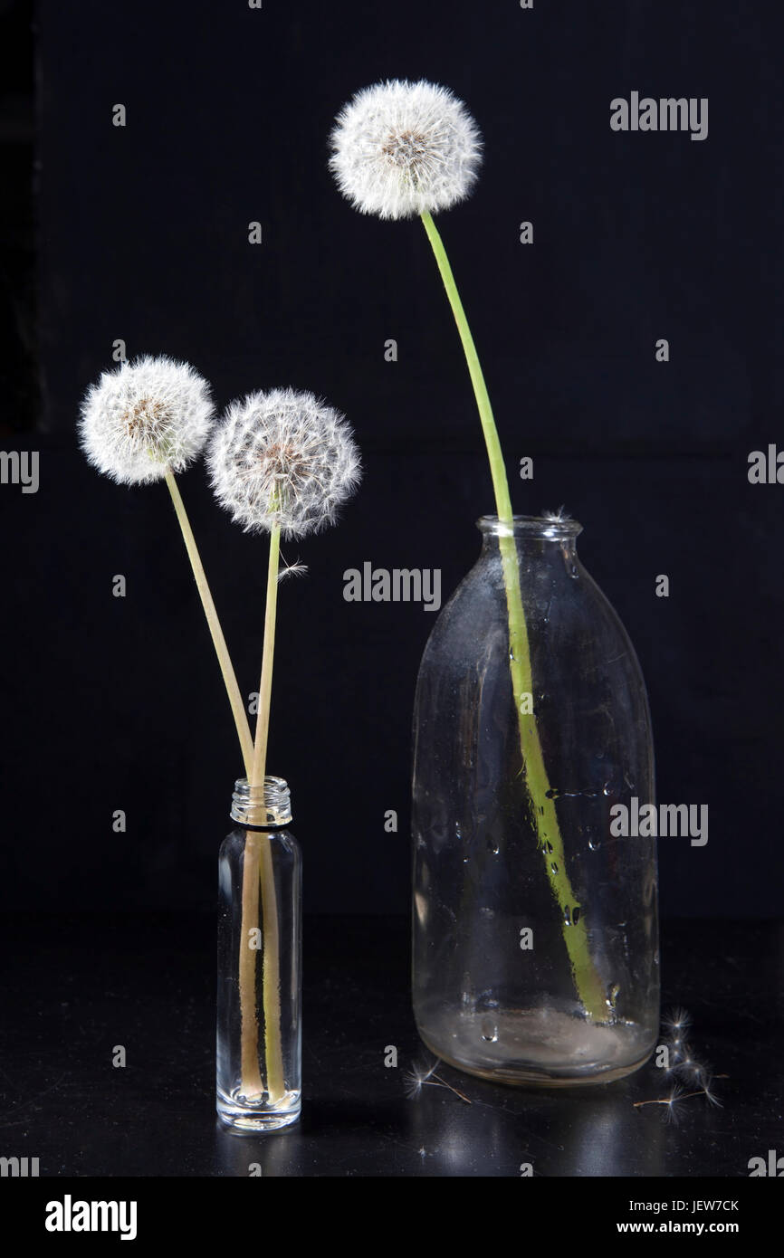 Detail of past bloom dandelion with smoke on black blur background - Stock Image