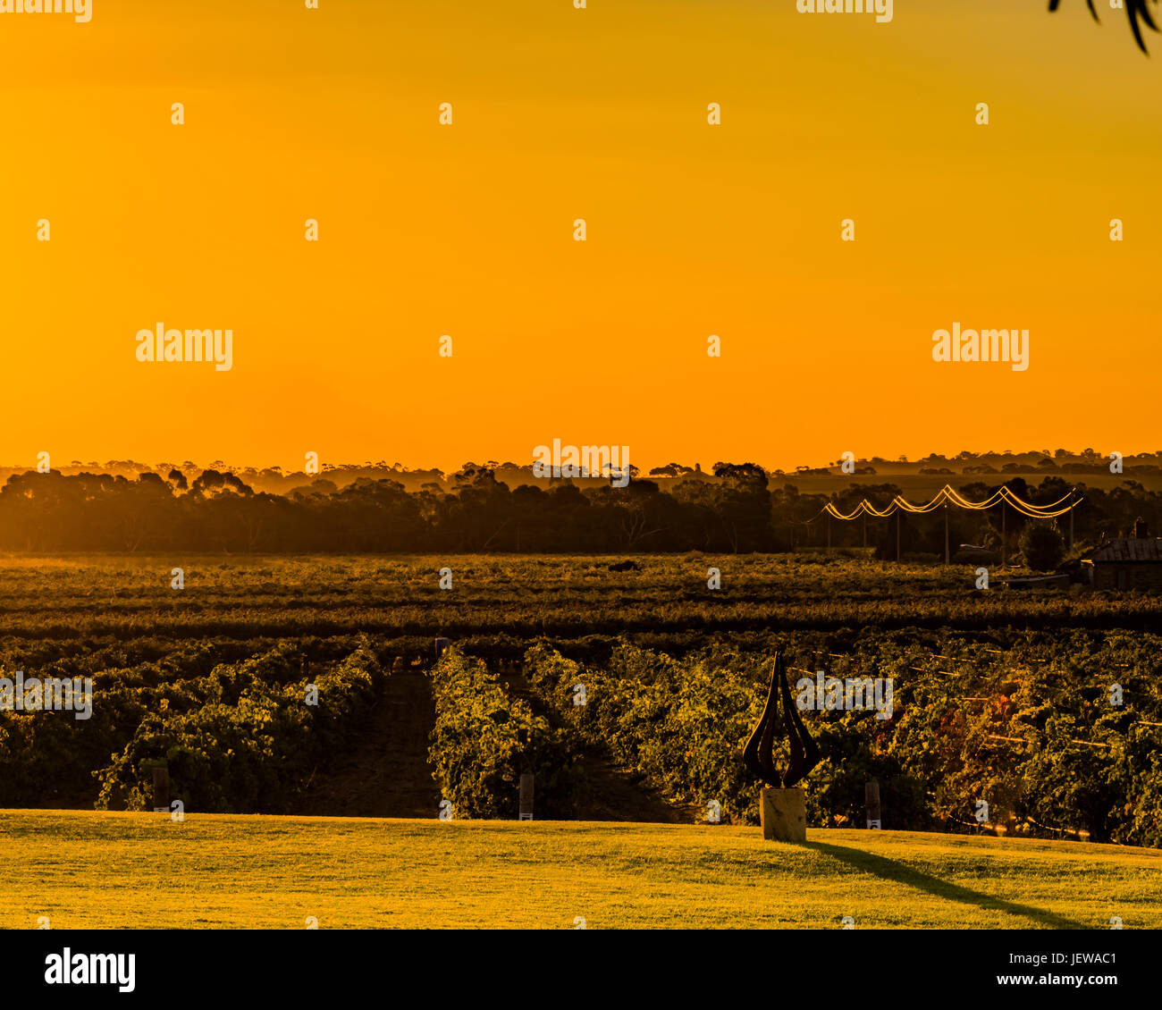 Looking over a vineyard at sunset in the Barossa Valley, South Australia Stock Photo