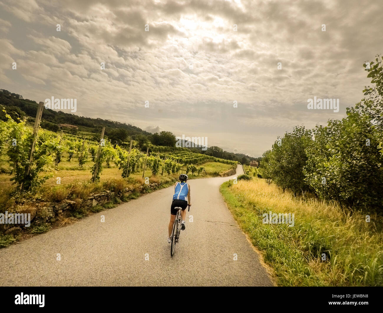 A woman cycling in Italy on a contry road wearing a blue sleeveless cycle jersey travel through the quiet italian - Stock Image