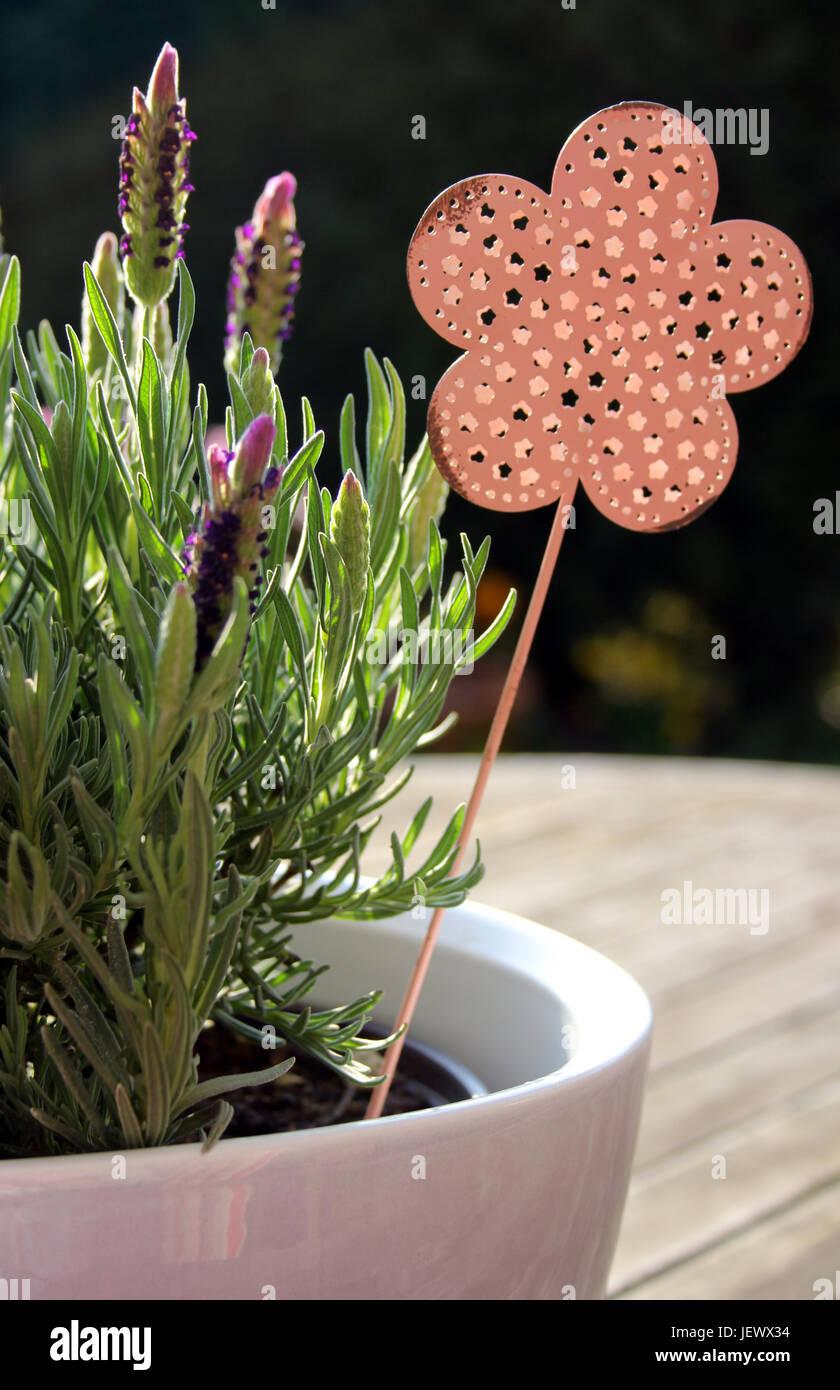 Lavendel mit Deko - Stock Image