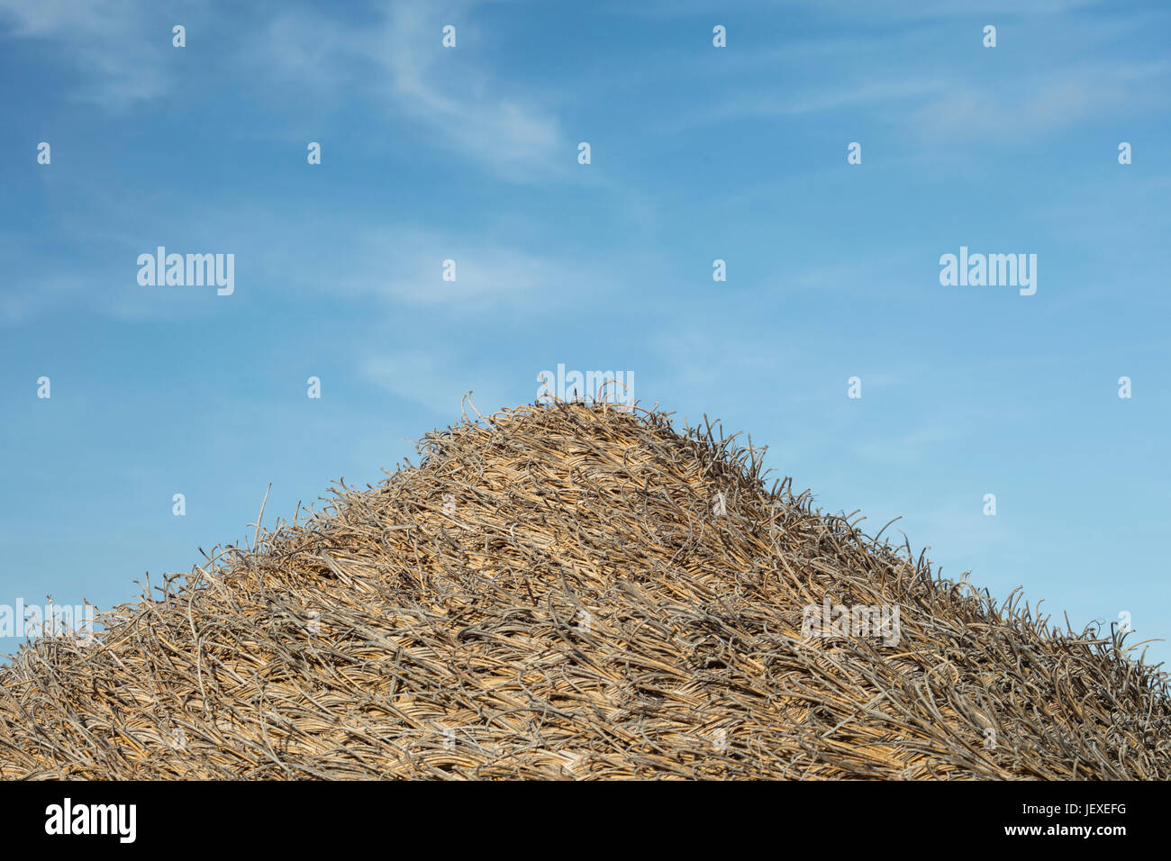 Detail of woven straw umbrella with sky in the background. - Stock Image