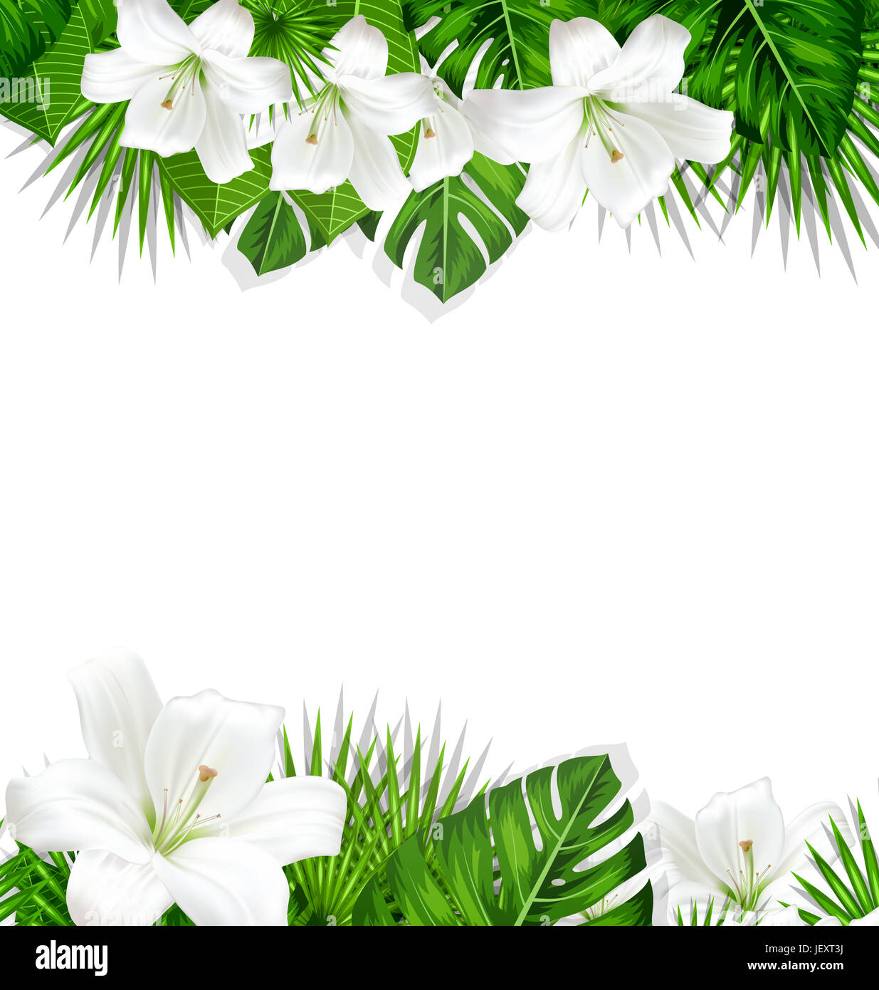Frame Border Background Branch With Tropical Leaves And White