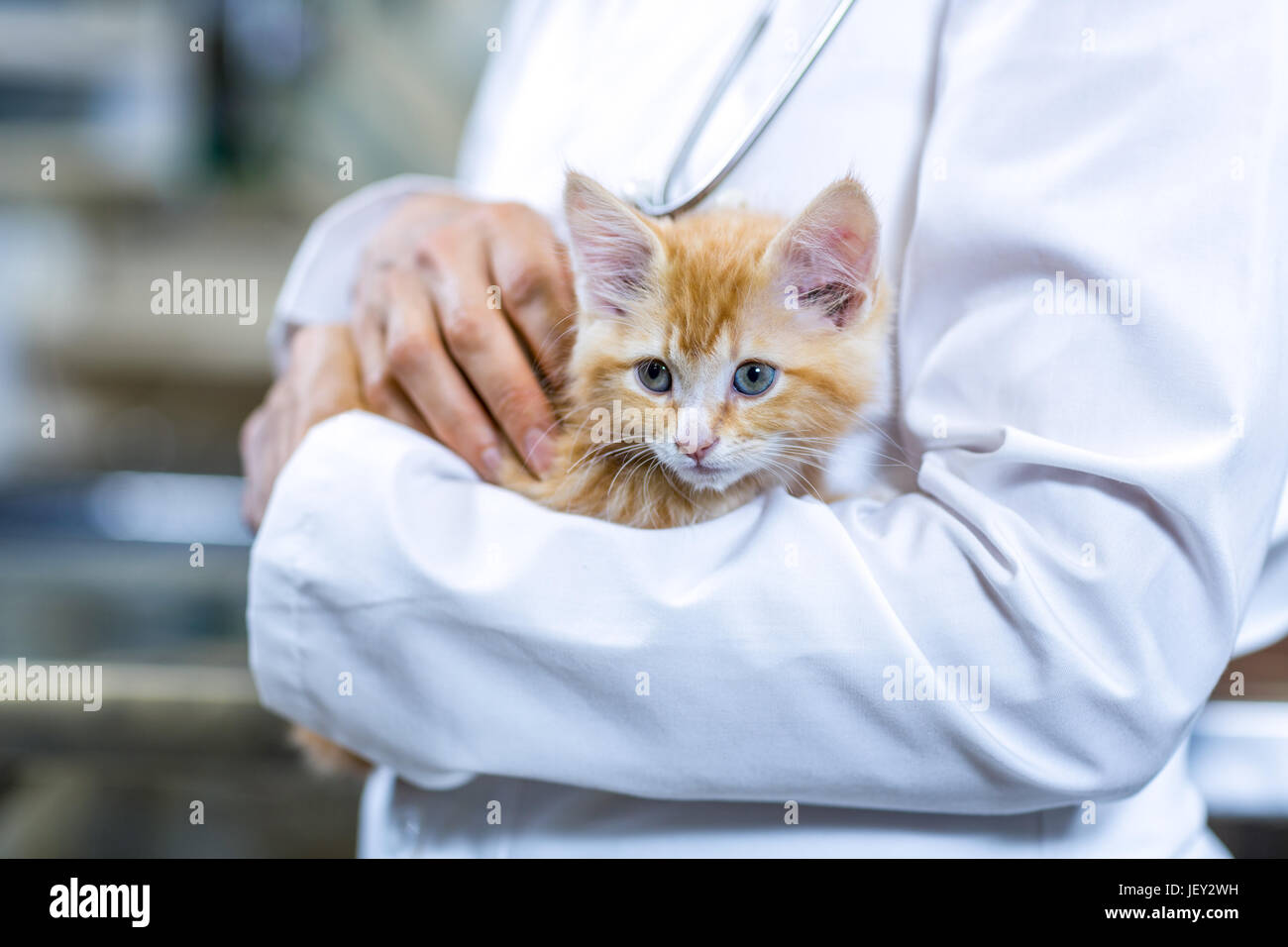 Close up of a cute kitten in vets arms - Stock Image