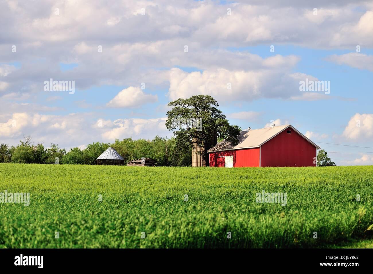 Red barn and silos near create a serene agricultural landscape on a farm in Burlington, Illinois, USA. - Stock Image