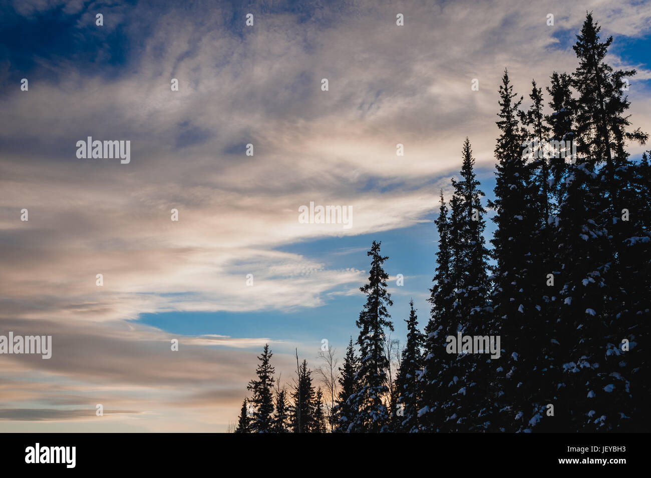 Snow covered trees with cloudy sky in Fairbanks, AK Stock Photo
