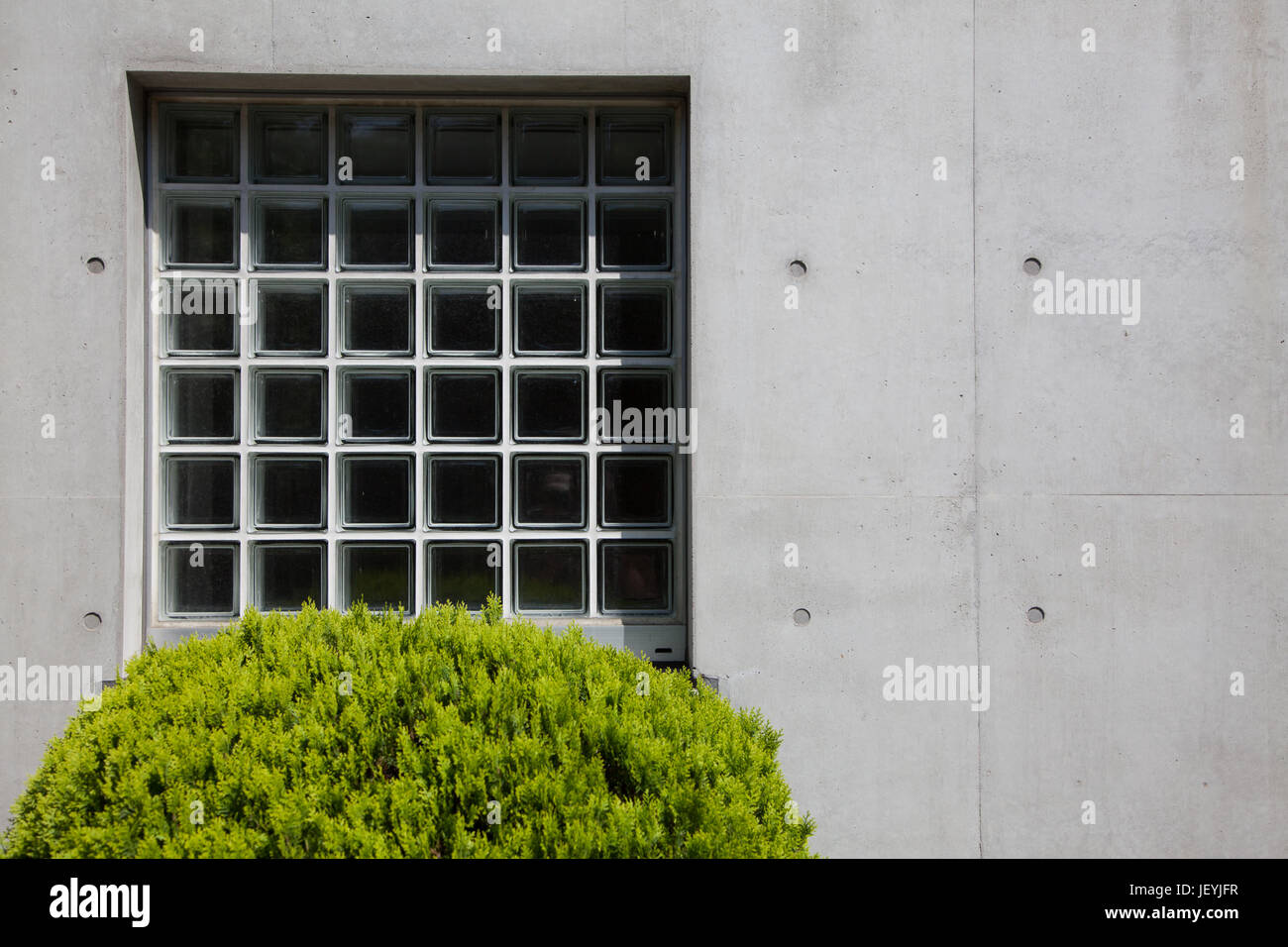 A window and a bush in Ebisu, Tokyo, Japan. Friday May 30th 2014 - Stock Image