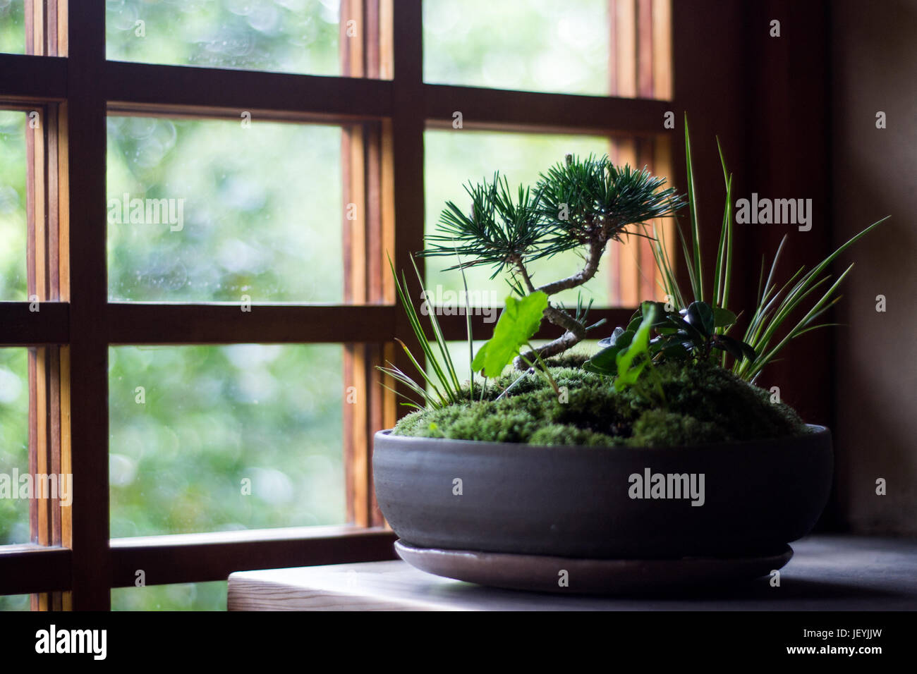Bonsai in Daitoku-ji Buddhist temple, Kyoto, Japan - Stock Image