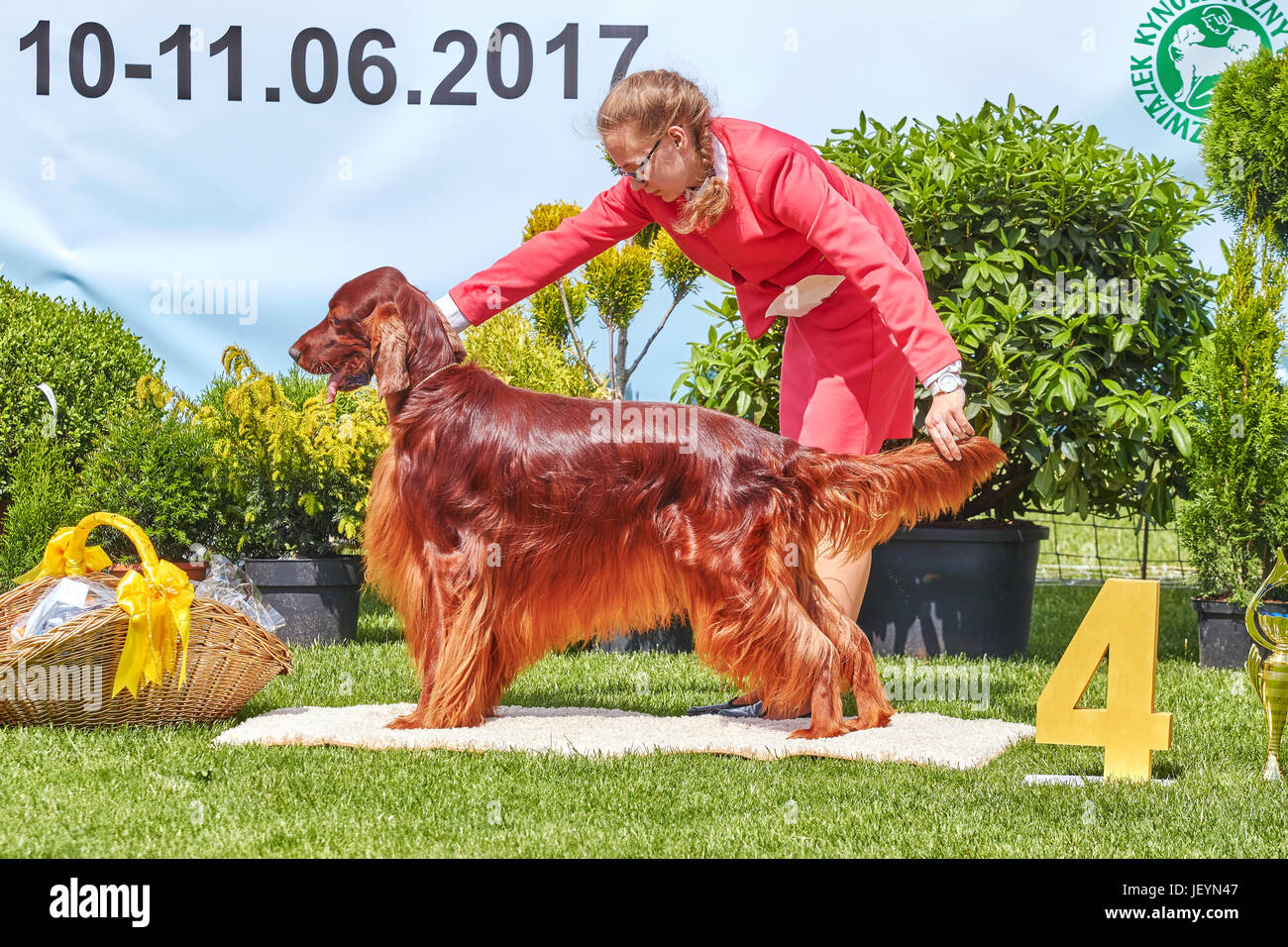 Szczecin, Poland - June 10, 2017: Woman presenting Irish Setter at the 31st West Pomeranian National Dog Show. - Stock Image
