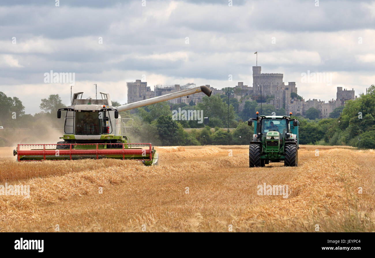 Combine Harvester cutting Wheat in a field in rural england, with Tractor and Trailer and Windsor Castle in the - Stock Image