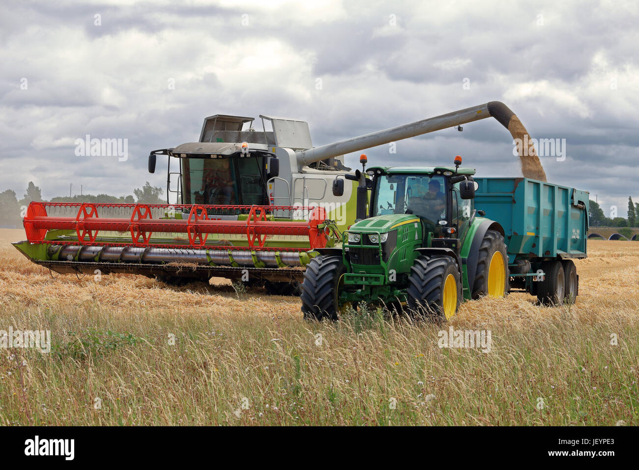 Combine Harvester cutting Wheat in a field in rural england, with Tractor and Trailer being filled with grain - Stock Image