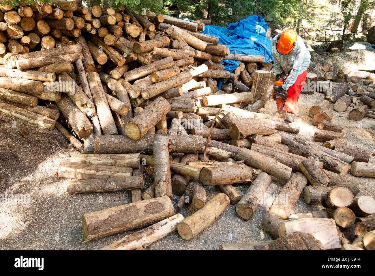 A woman cuts firewood with a chainsaw.  Whistler BC, Canada./ - Stock Image