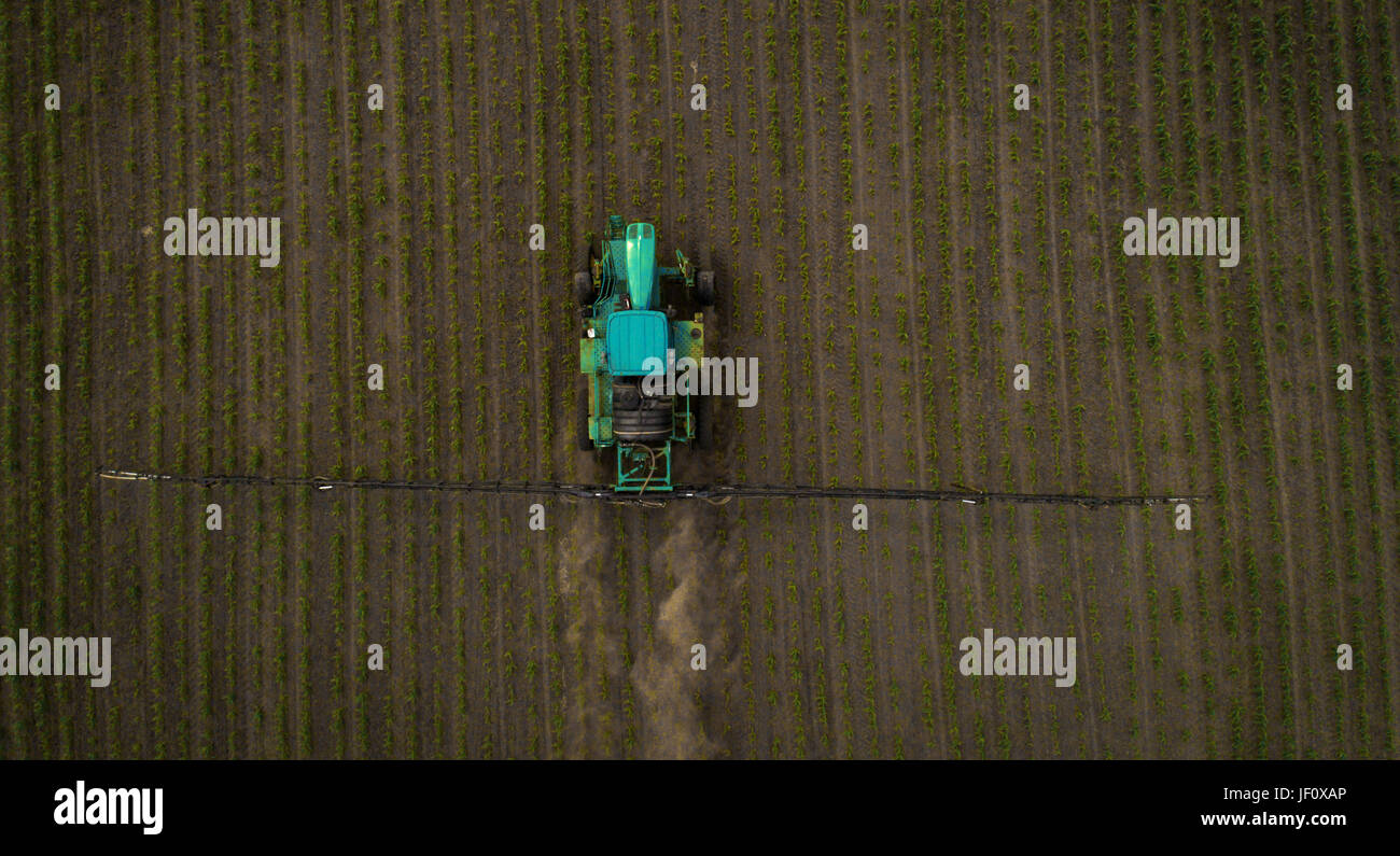 A blue tractor moves through the spring field and sprays fertilizers on plants planted on it. Spring processing - Stock Image