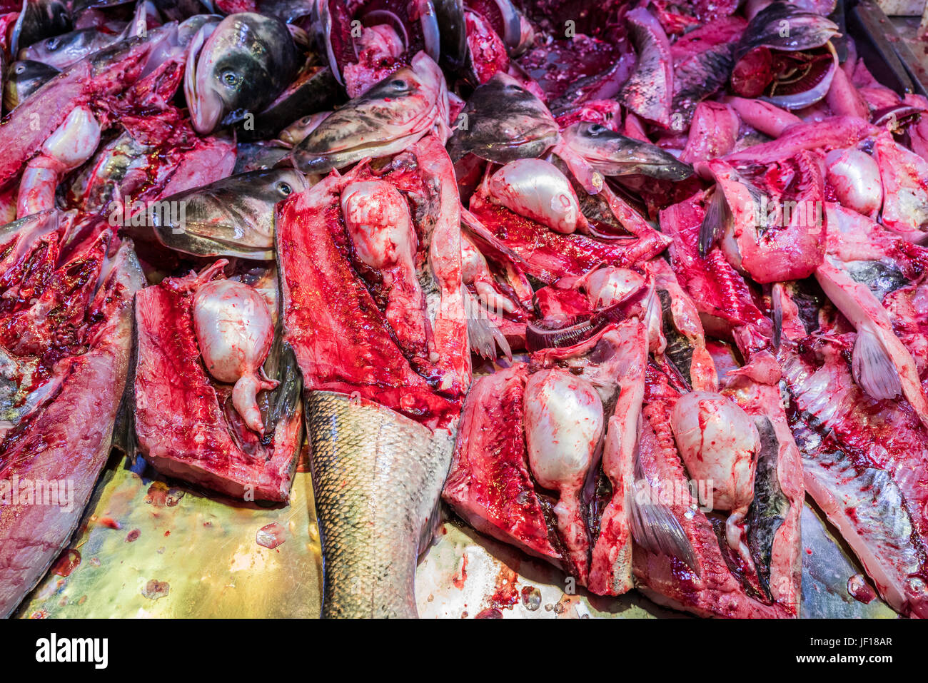 Gruesome close-up of a stack of gutted fish. - Stock Image