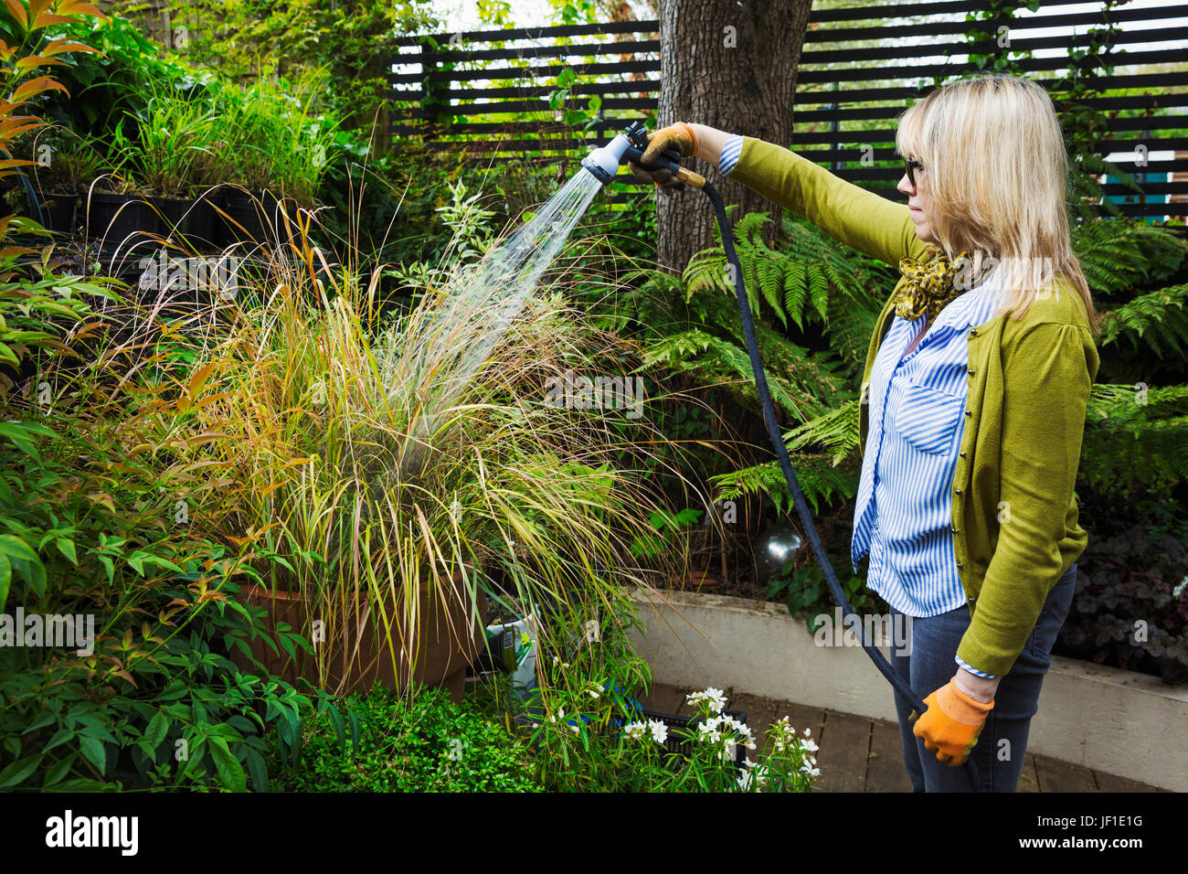 Woman standing in a garden, watering a plant in a pot using a hosepipe with spray attachment. - Stock Image