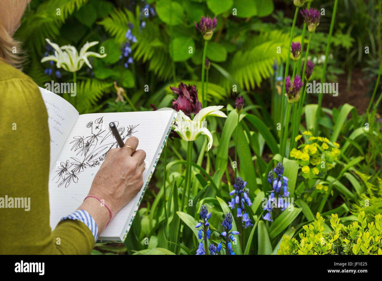 Over the shoulder view of a woman sitting in a garden by a flowerbed, drawing in a sketchbook. - Stock Image