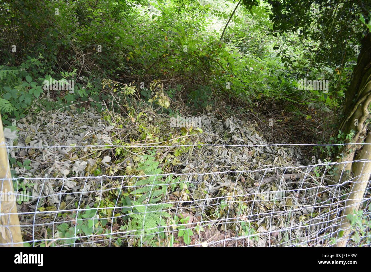 Rotting vegetation over garden fence Stock Photo