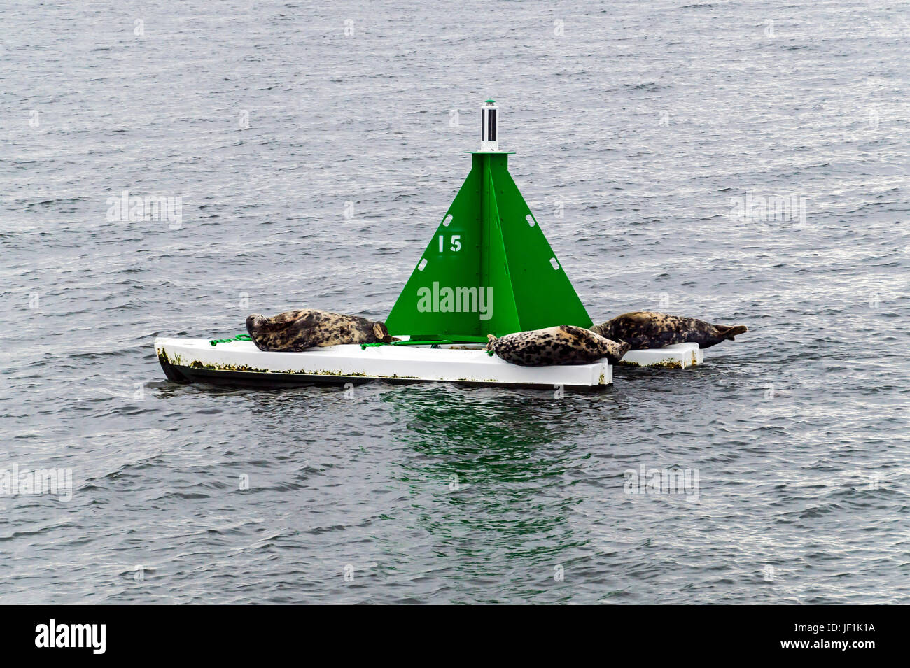 Buoy in the Firth of Forth Queensferry Lothian near Edinburgh Scotland UK with seals having a snooze - Stock Image