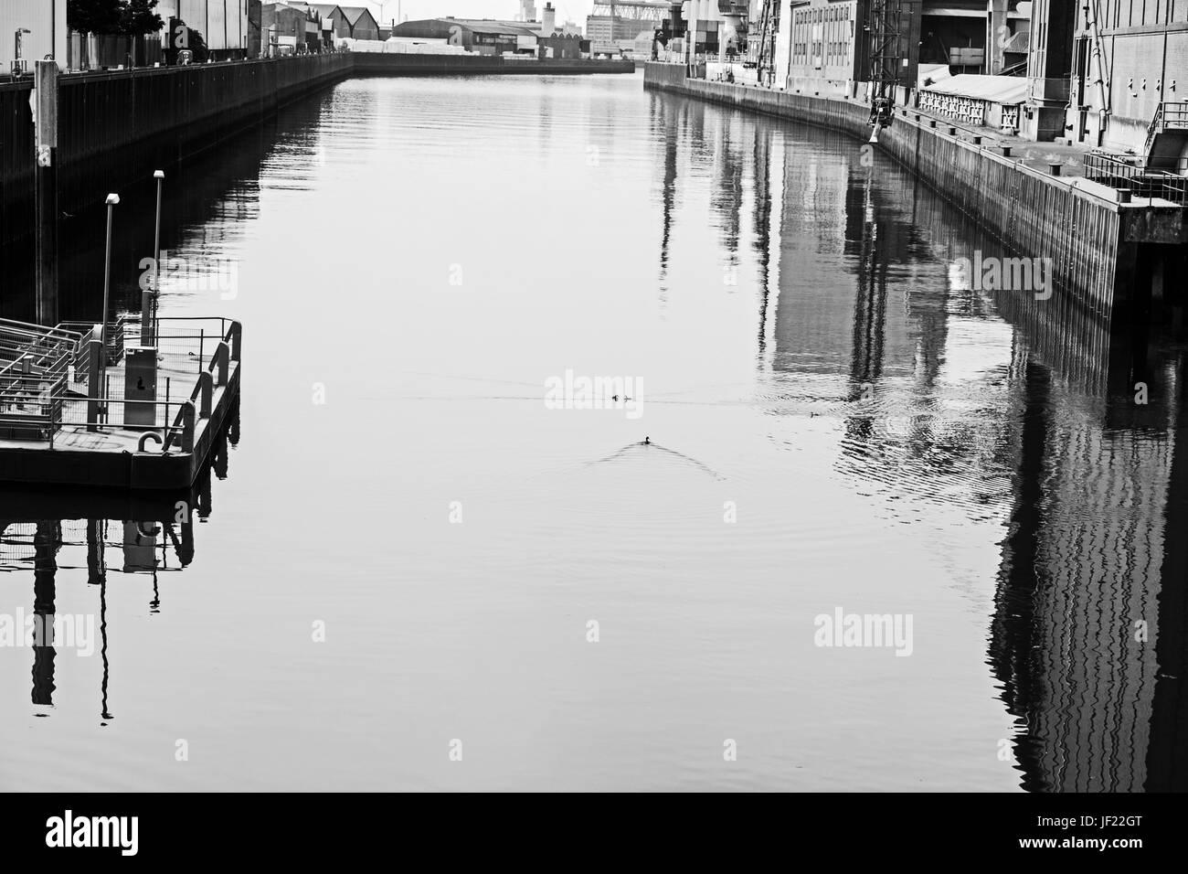Enten am Europahafen Bremen - Stock Image
