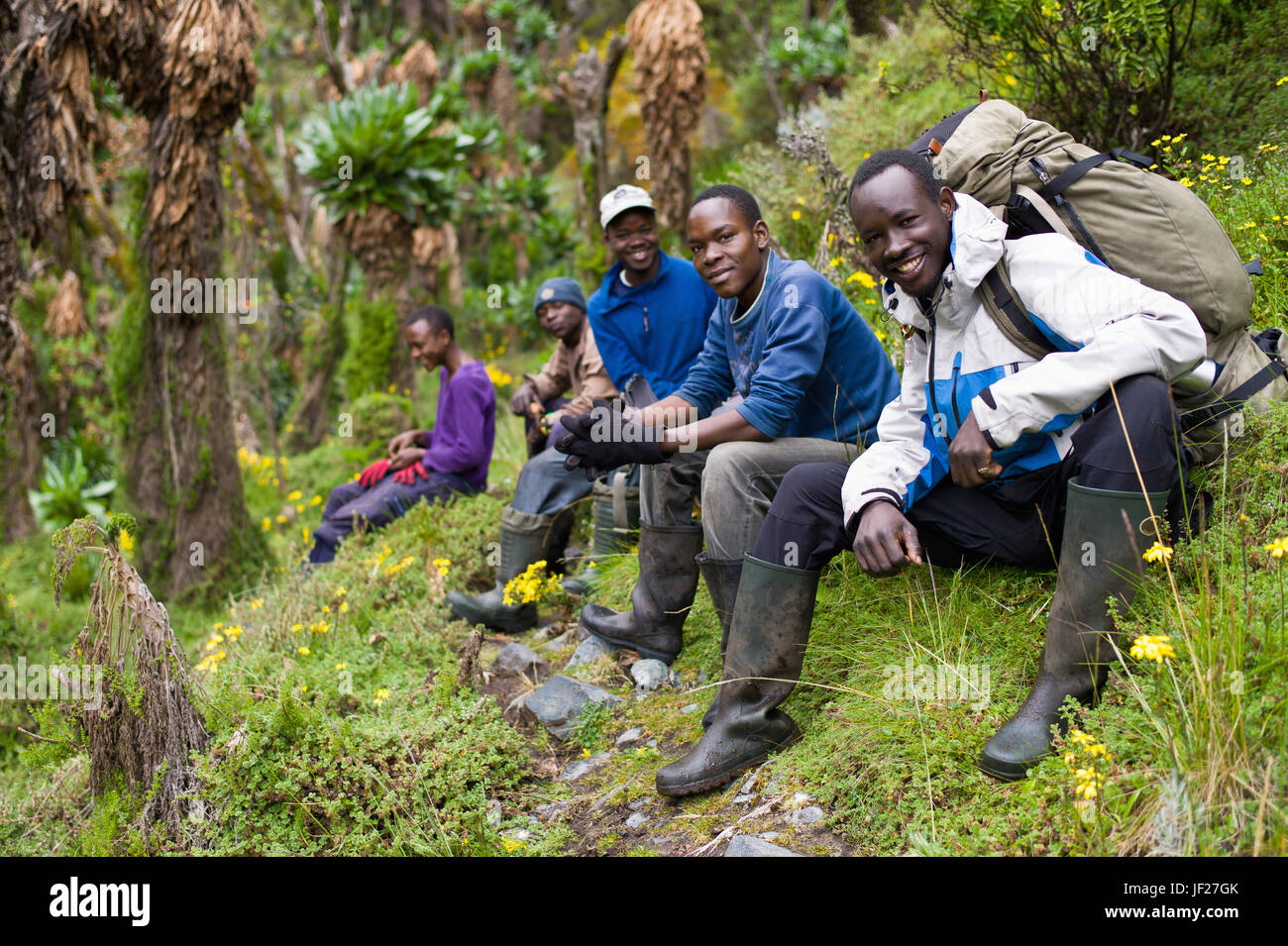 Guides and porters rest amid senecio trees in the Afro alpine zone of the Rwenzori Mountains, Uganda, along the - Stock Image