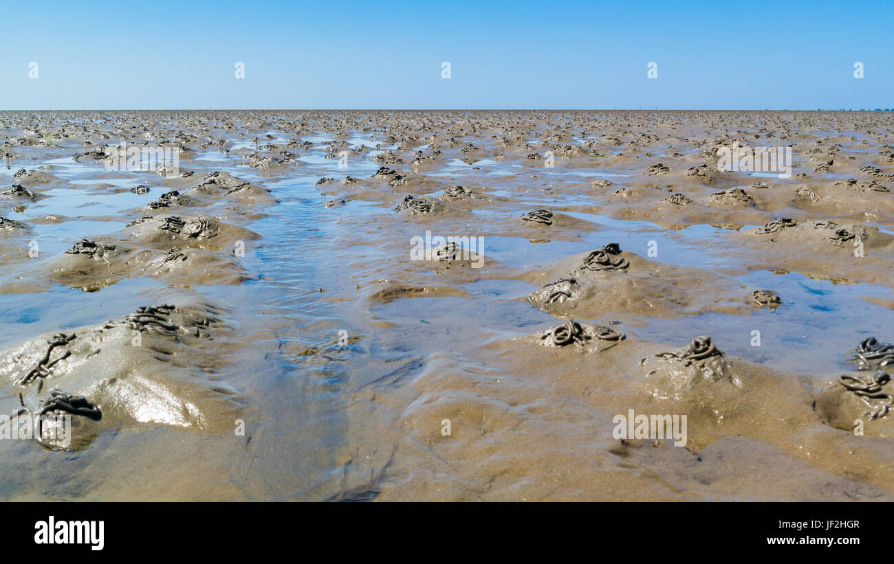 Mud flats with pattern of casts made by burrowing lugworms at low tide on Waddensea, Netherlands - Stock Image