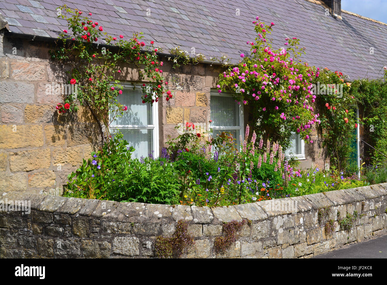 Cottage garden, Chatton, Northumberland - Stock Image
