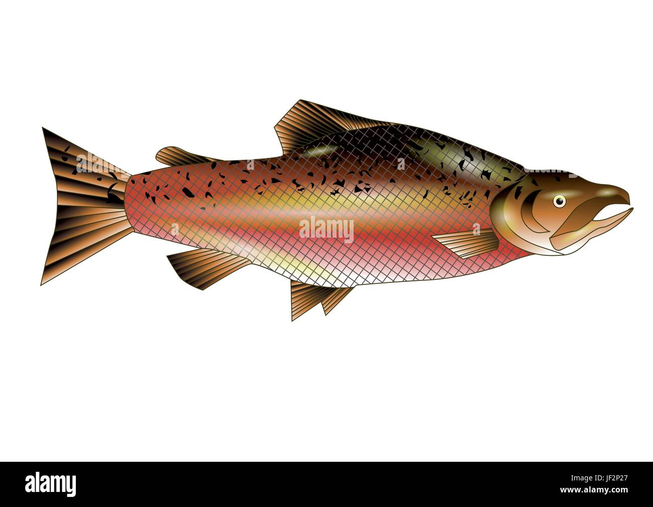 food, aliment, isolated, closeup, wild, angle, fish, illustration, fishing, - Stock Vector