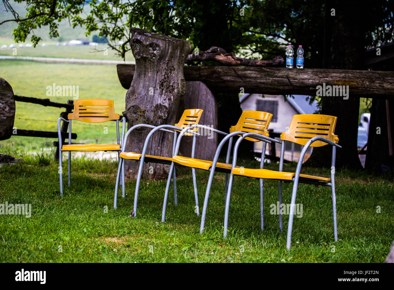 Four yellow chairs standing on grass in a garden near a trunk of a tree. - Stock Image