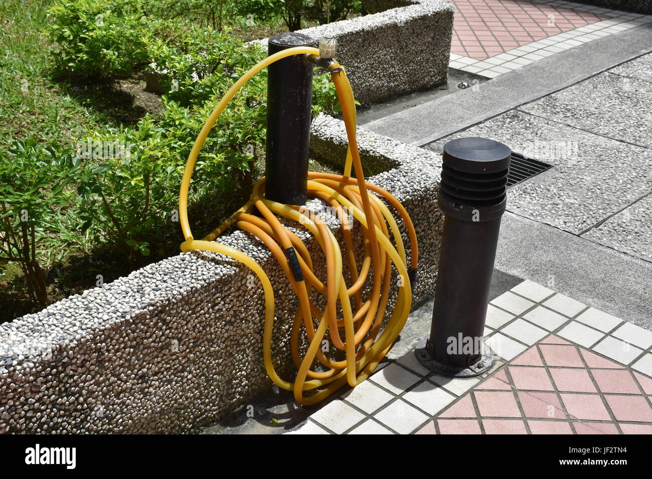 Long yellow garden hose rolled up around a faucet near bushes and ...
