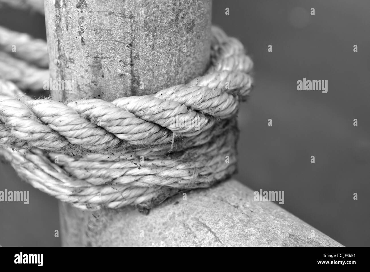 used rope tight around a wooden pole - Stock Image