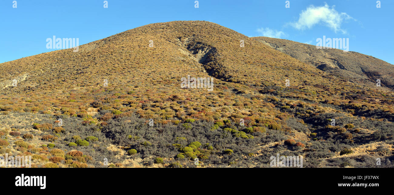 Canterbury High Country at Porters Pass carpeted in multi-coloured Native plants, shrubs and tussock - Stock Image