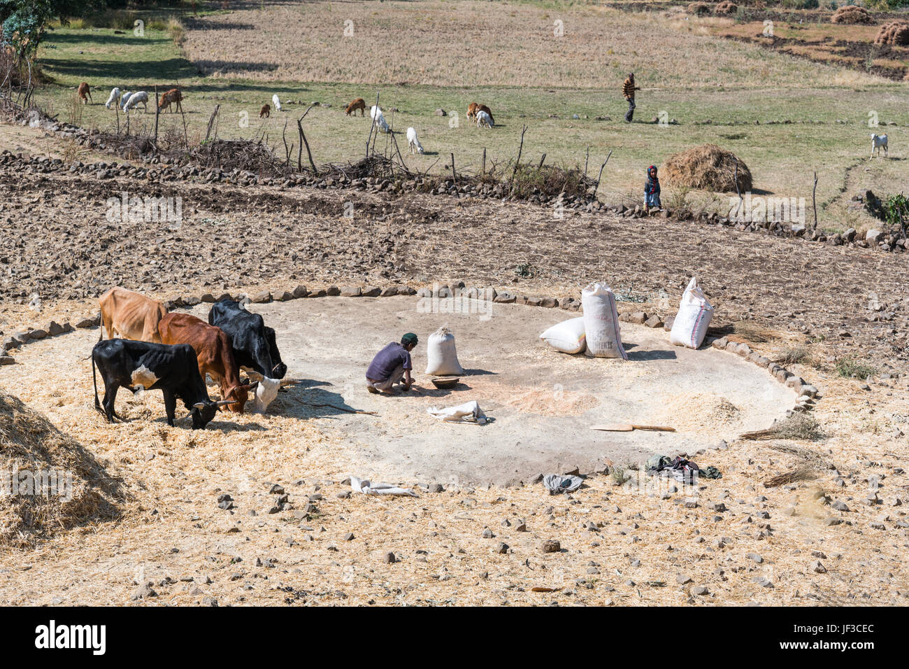 Lalibela, Ethiopia, Farmers at work in a field in the outskirts of the country. - Stock Image